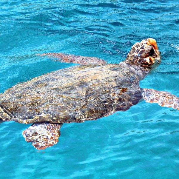 Caretta-Caretta Zante, Destination Weddings Your Event Corfu